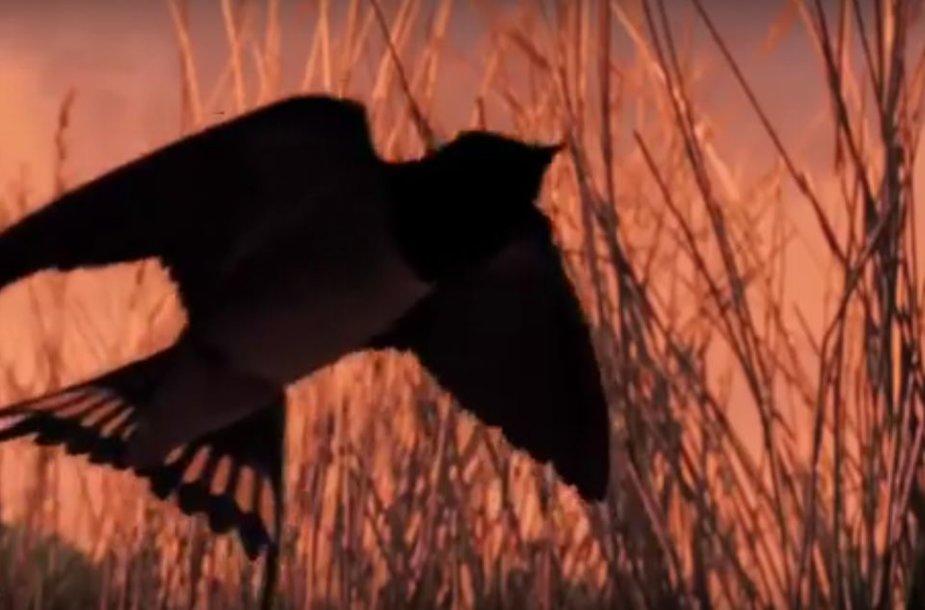 Kadras iš LSDP reklaminio klipo