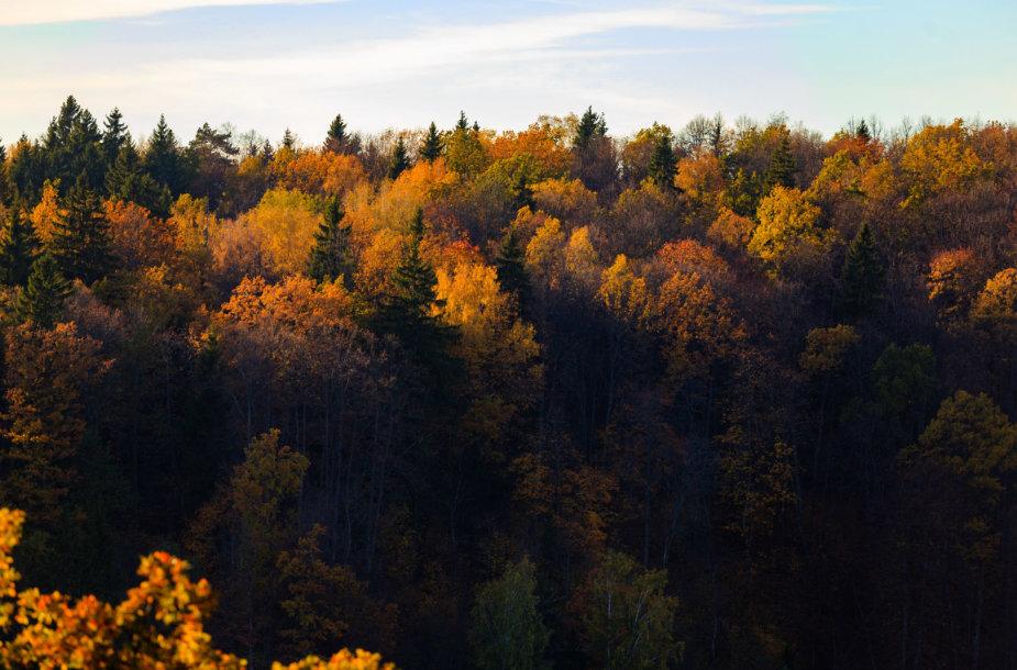 Regykla prie Balsio ežero tapo rudeninė