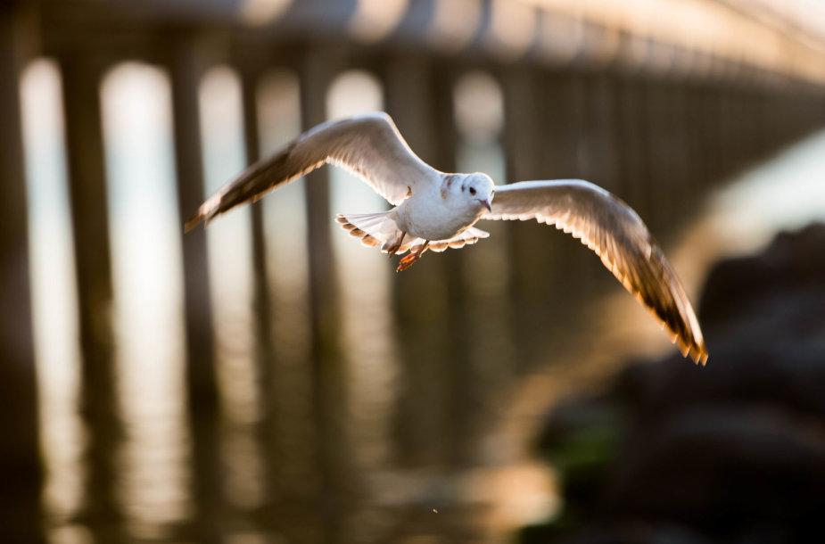 Žmonių minia rinkosi prie Palangos tilto stebėti saulėlydžio
