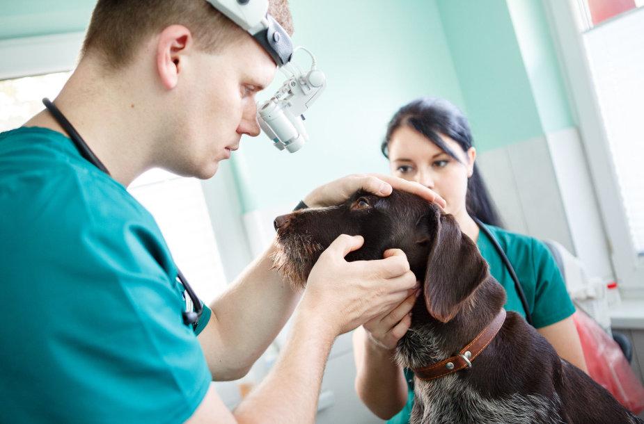 Gyvūnų ir žmonių organizmus gretinantis veterinaras V.Siaurys kuria naują kliniką