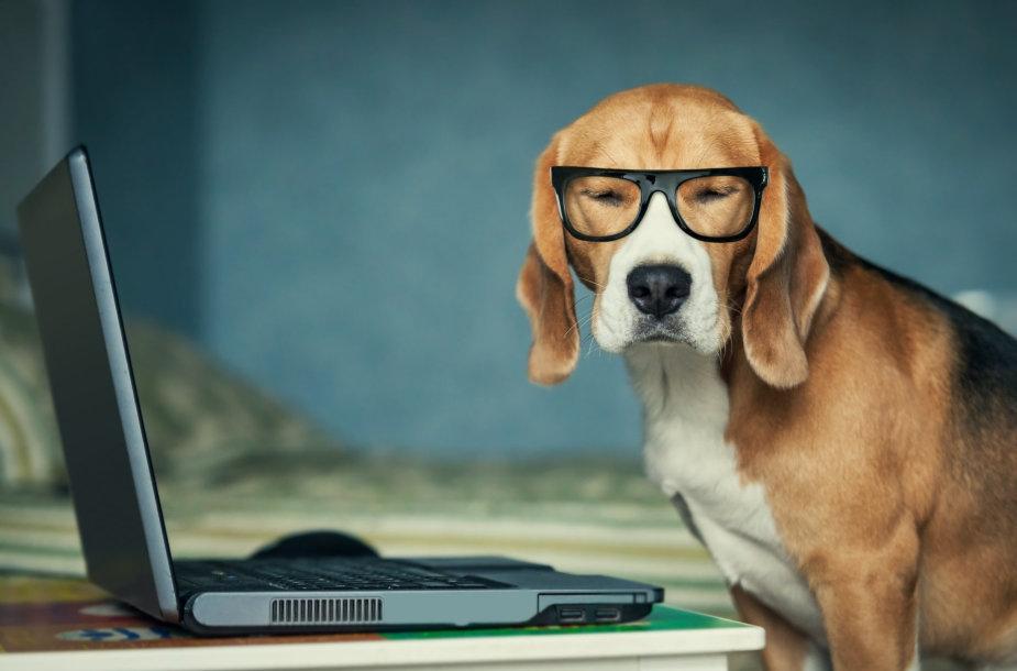 Šuo su akiniais