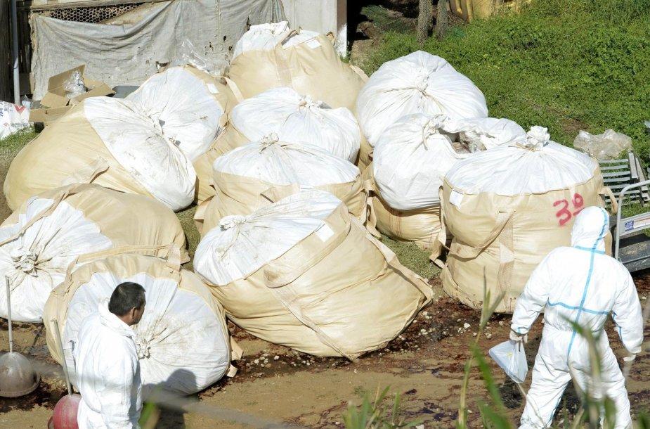 Didžiuliai maišai su paskerstomis vištomis