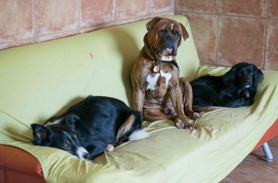 Šunų viešbutis Vokietijoje