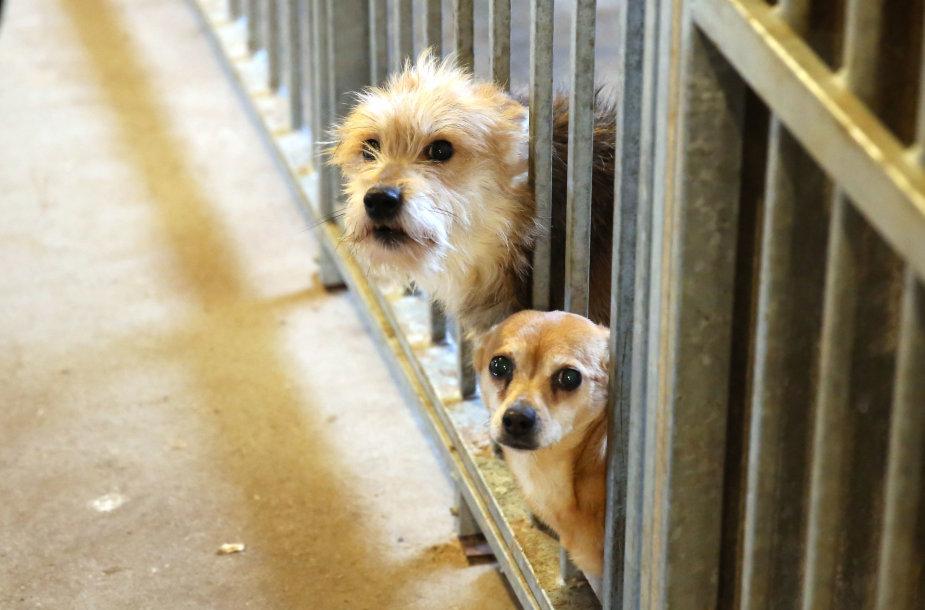 Paramos akcija beglobiams gyvūnams