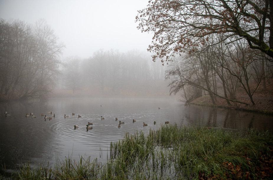 Ankstyvas rytas Markučių parke