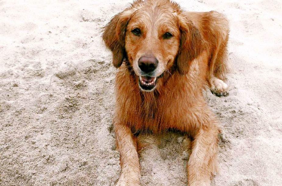 Name Kalifornijoje gyvenantis šuo.  Trustedhousesitters.com siūlo gyventi namuose mainais už šeimininkų gyvūno priežiūrą