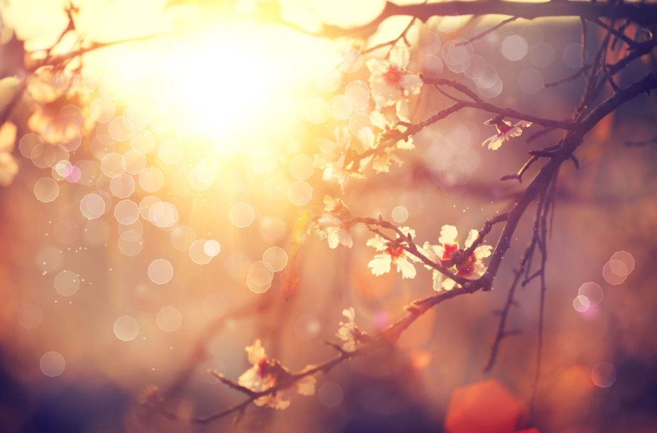 Pavasaris
