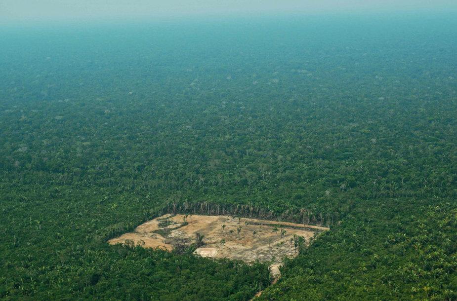 Medžių kirtimas Amazonėje