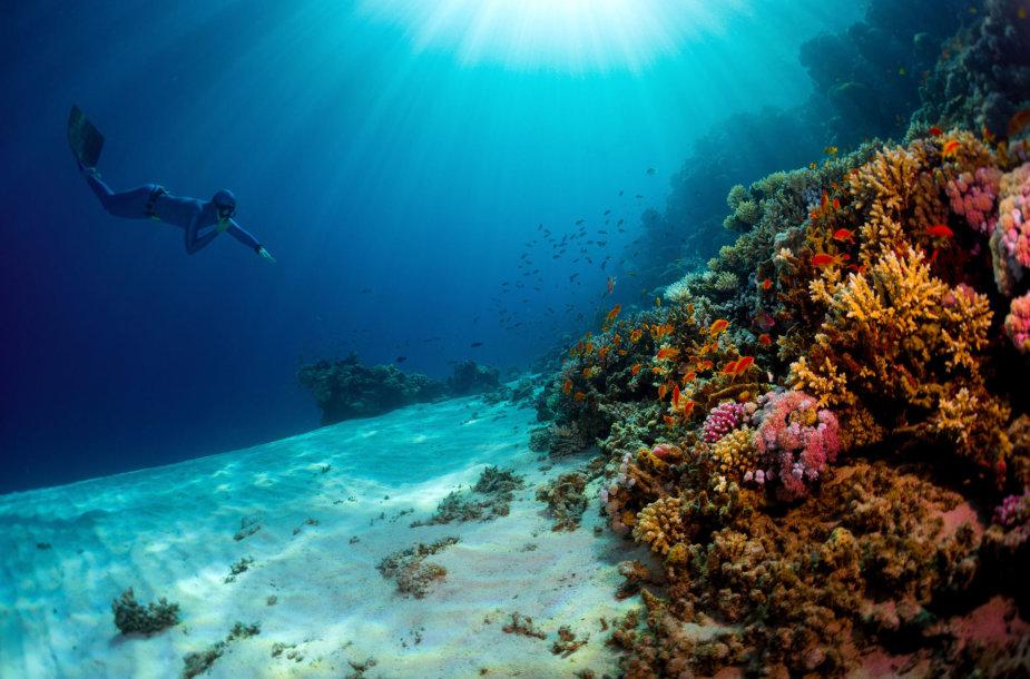 Nardymas Raudonojoje jūroje