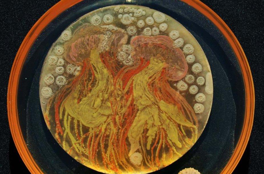 Mokslininkų iš mikroorganizmų užauginti meno kūriniai