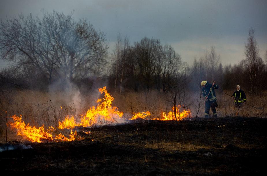 Ugniagesiai gesina žolę