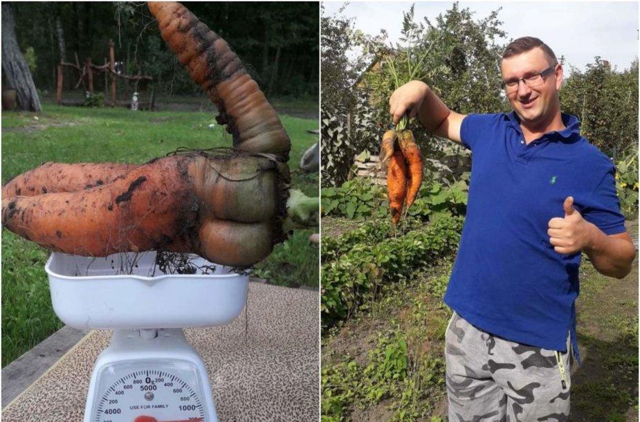 Tomo ir Linos ūkyje užaugusi morka