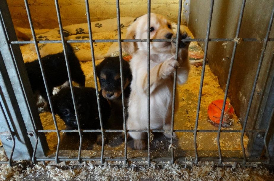 Prieglaudai padeda ir profesionalūs vetrinarai, kurie suteikia pagalbą sužalotiems gyvūnams.
