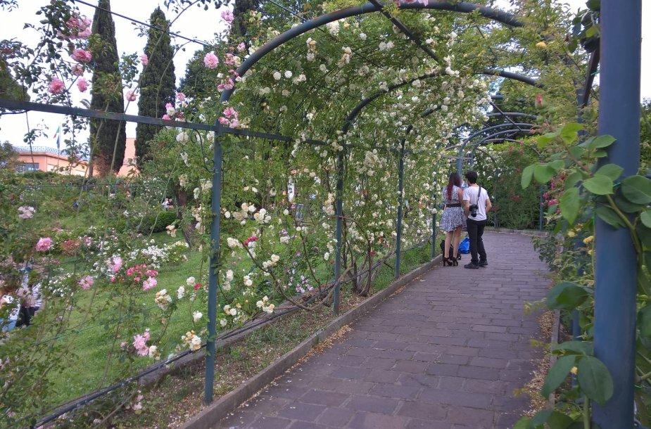 Rožių tunelis