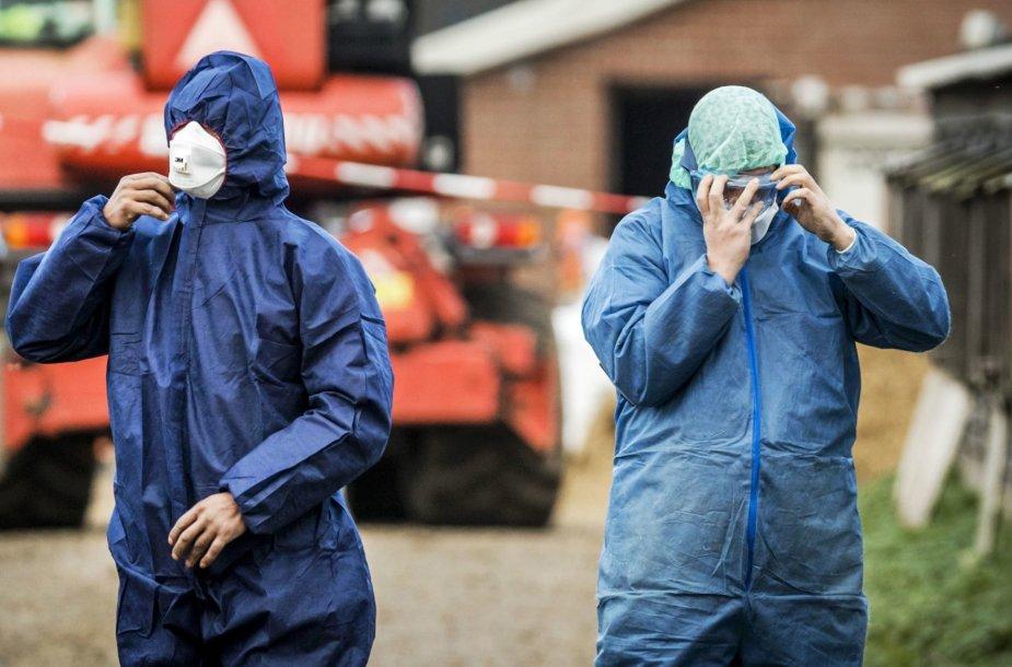 Nyderlanduose dėl paukščių gripo išpjauta 190 tūkst. ančių