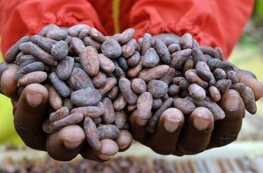 Kakavos pupelės