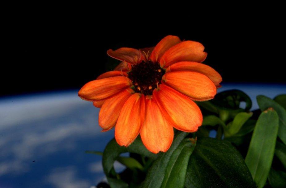 Astronauto Scotto Kelly darytos nuotraukos iš TKS