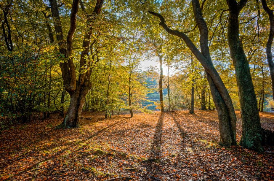 Epping miškas