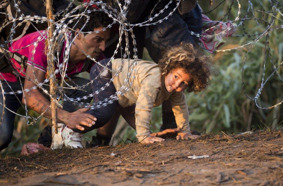 Pabėgėliai braunasi pro dygliuotą vielą bando patekti į Vengriją