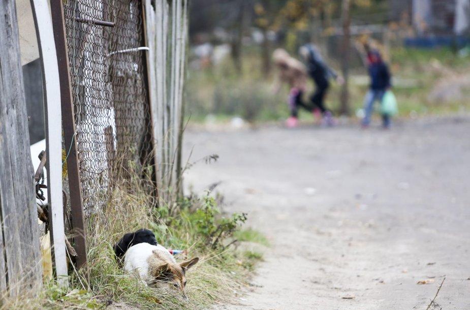 Buvę narkomanai romų tabore ieškojo savo senųjų narkotikų prekeivių