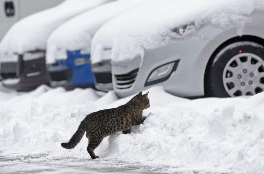 Žiema Lenkijoje