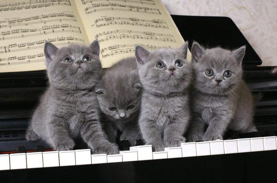 Katinai.