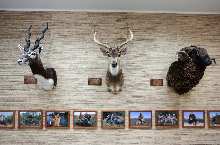 Medžioklės trofėjų ekspozicija
