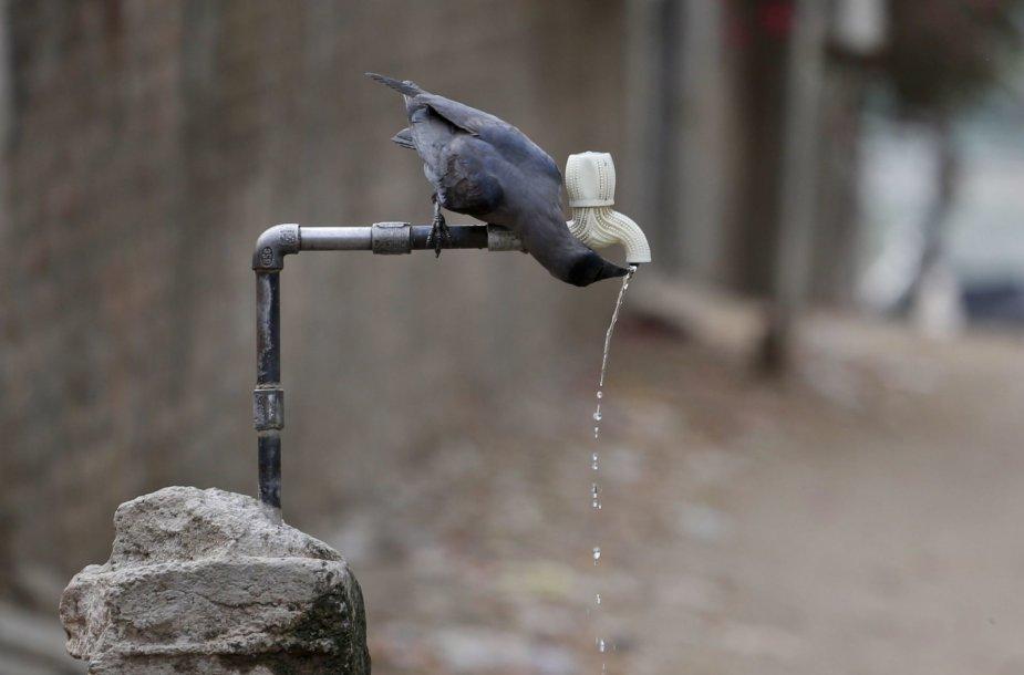 Didžiausia per dešimtmetį sausra Indijoje