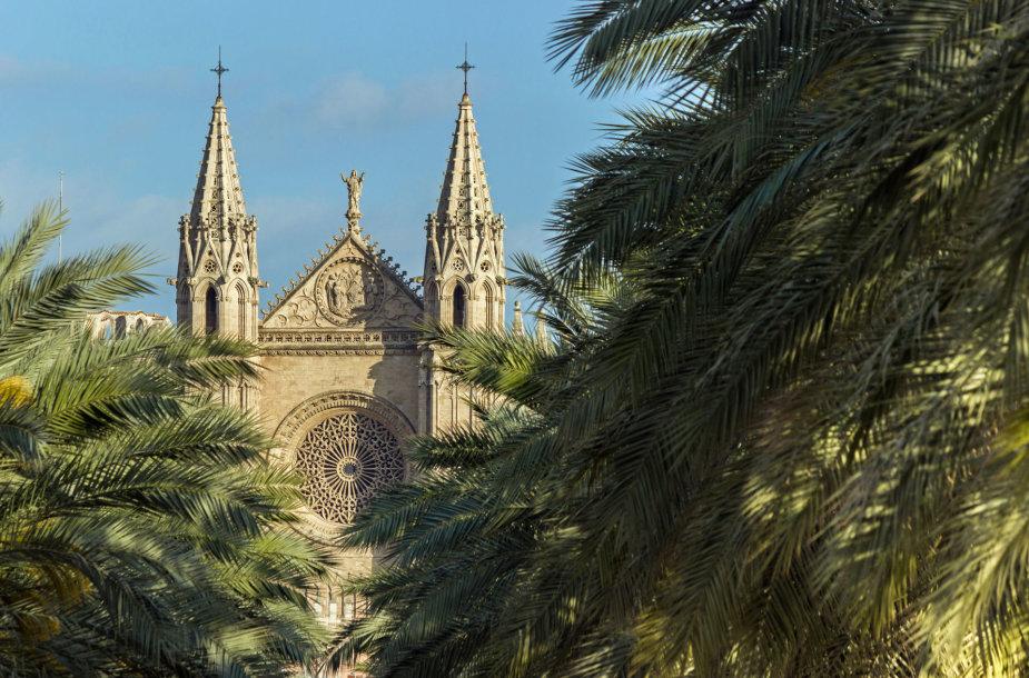 Maljorkos Palmos katedra