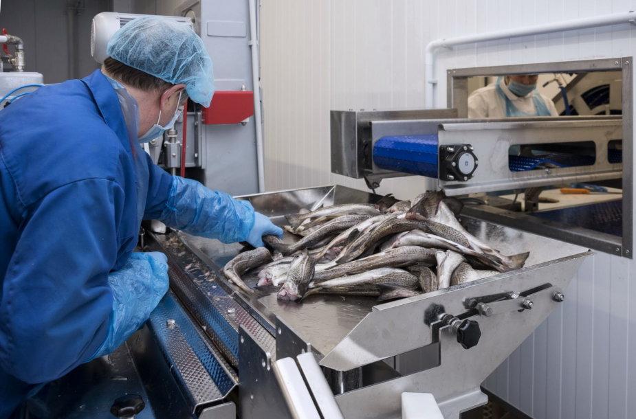 Klaipėdos žuvininkystės produktų aukcionas