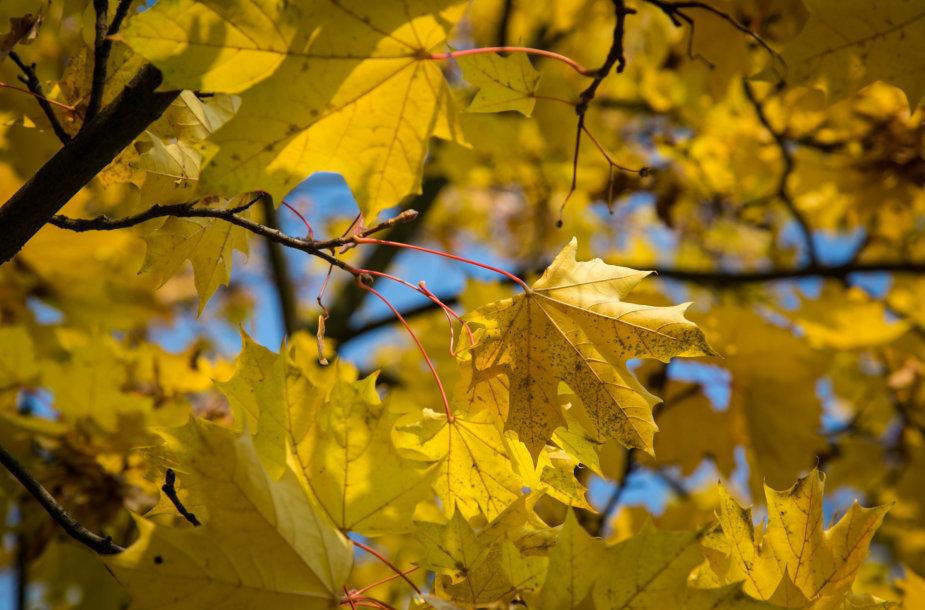 Rusvai auksinis ruduo Vilniuje