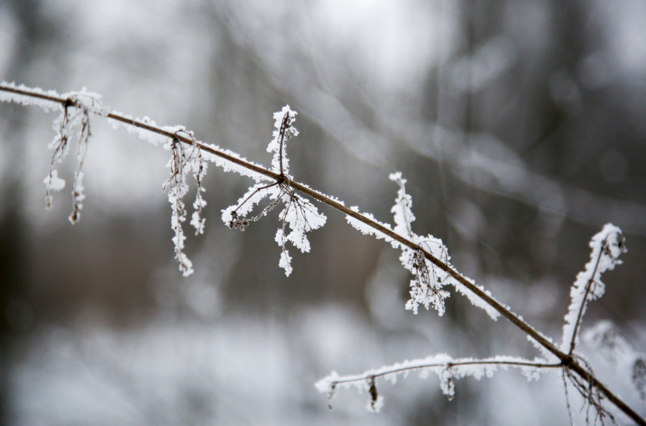 Žiema Verkių regioniniame parke