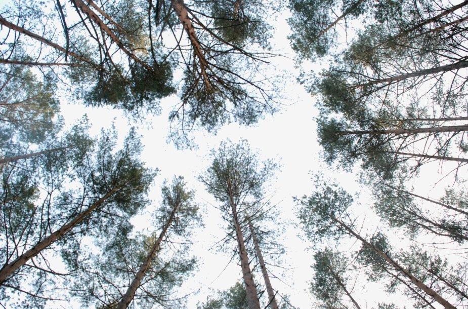 Varėnos miškų urėdija