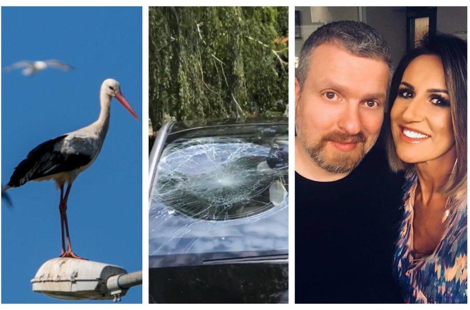 Gandras, apgadintas automobilis, Deivydas Zvonkus, Katažina Zvonkuvienė