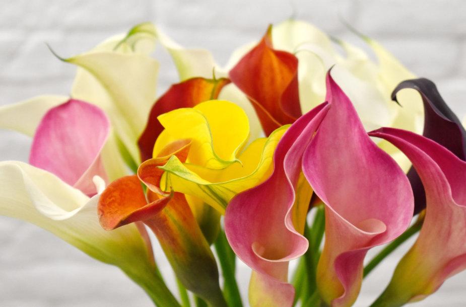 Gėlių puokštė