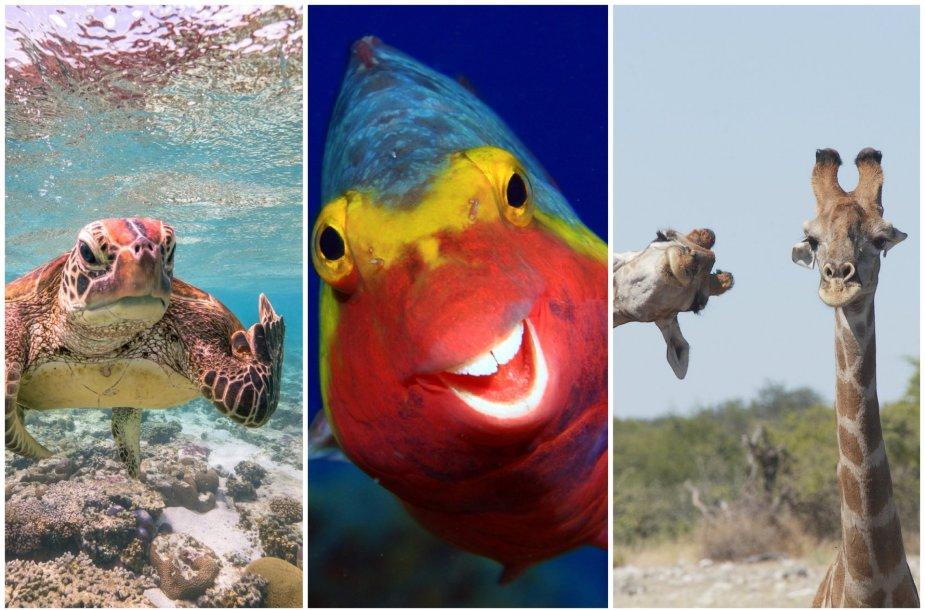 """Comedy Wildlife Photography Awards"" finalininkai"