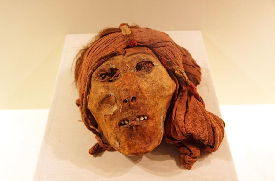 Sudžiovinta žmogaus galva muziejuje