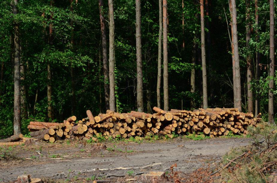 Iškirstas miškas