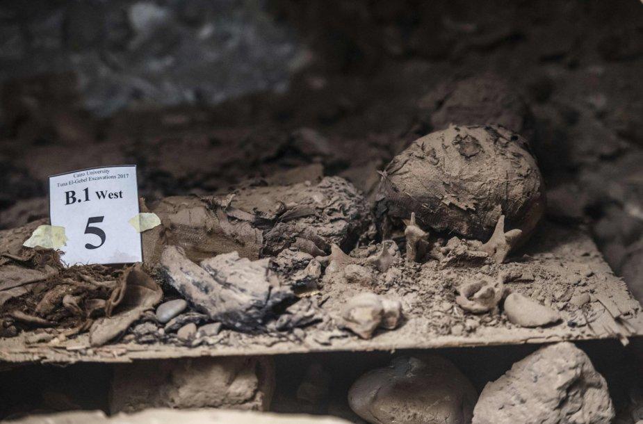 Egipte rastos naujos katakombos su mumijomis