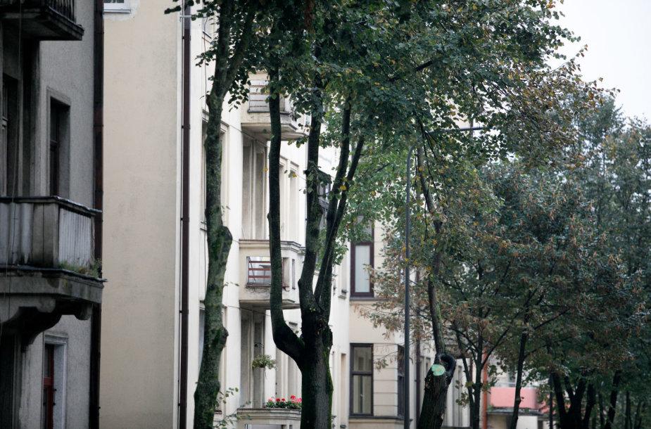 Medžiai A.Mickevičiaus gatvėje