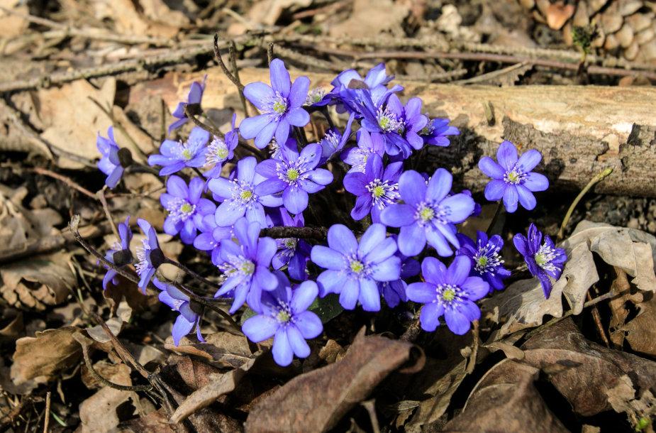 Pavasaris Lietuvoje