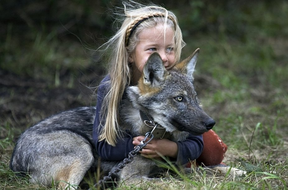 Mergaitė žaidžia su jaunu vilkiuku.