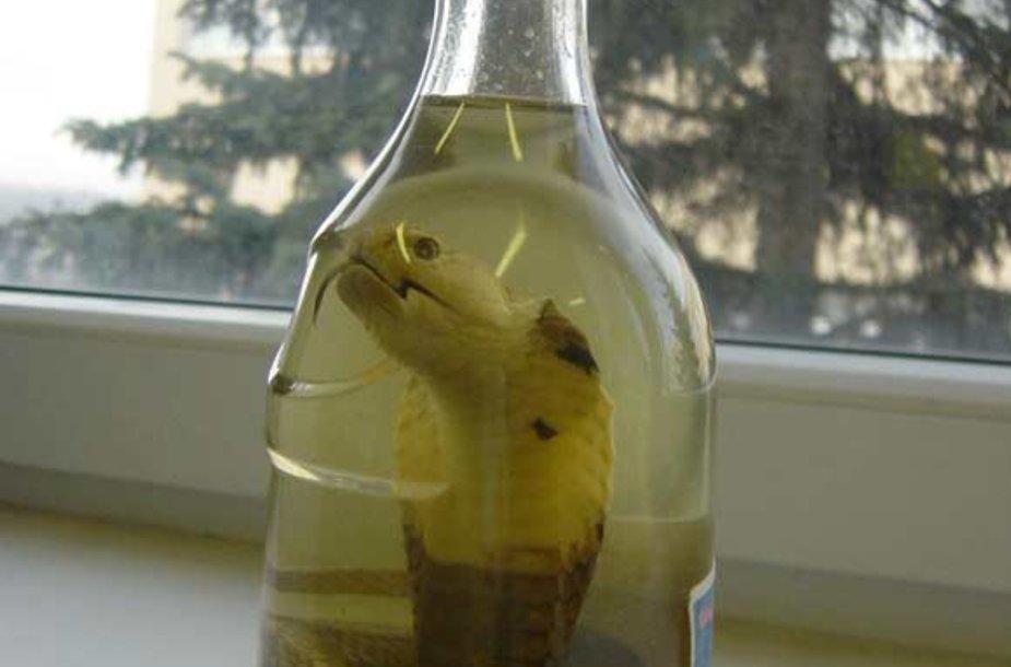 Kobra butelyje