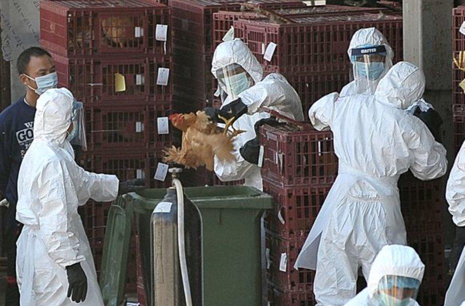 Prieš keletą dienų paukščių gripas buvo aptiktas Honkonge.