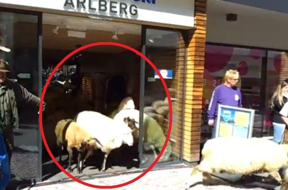 Avys sporto prekių parduotuvėje