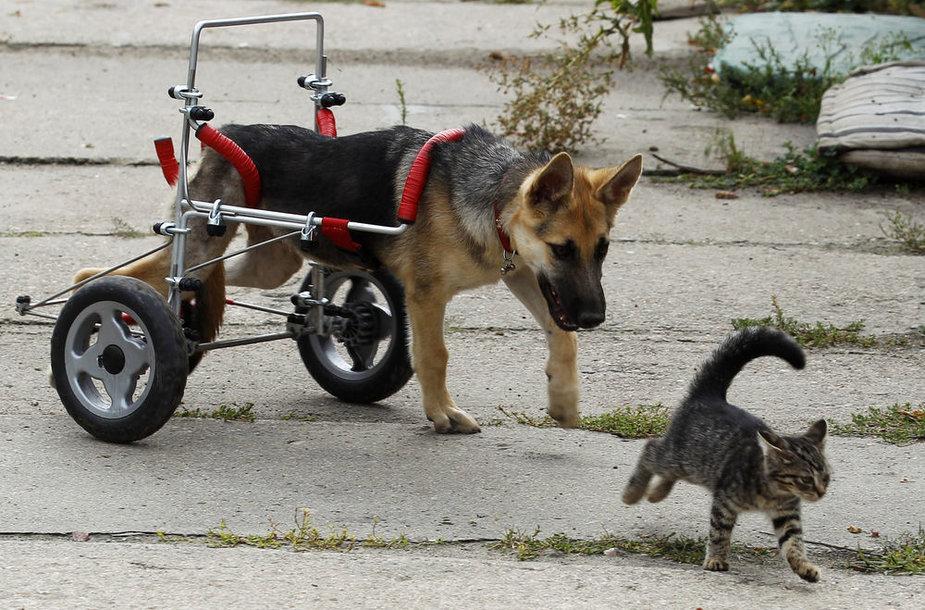 Neįgalus šuo