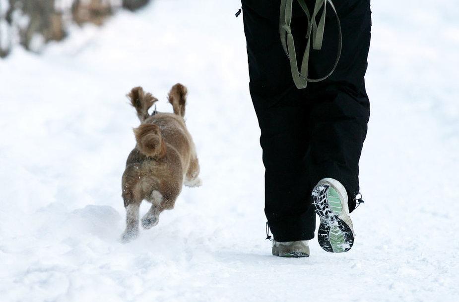 Pasivaikščiojimas su šunimi žiemą