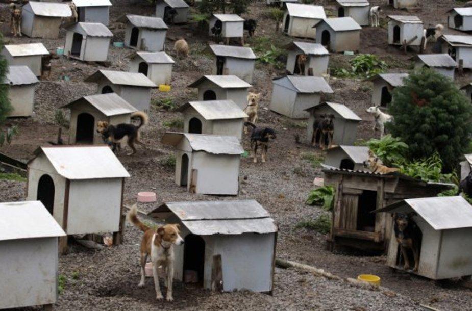 Šuniška favela įsikūrusi 1,2 ha plote.
