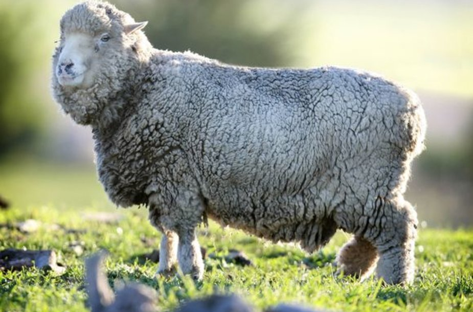 Seniausia avis pasaulyje Lucky