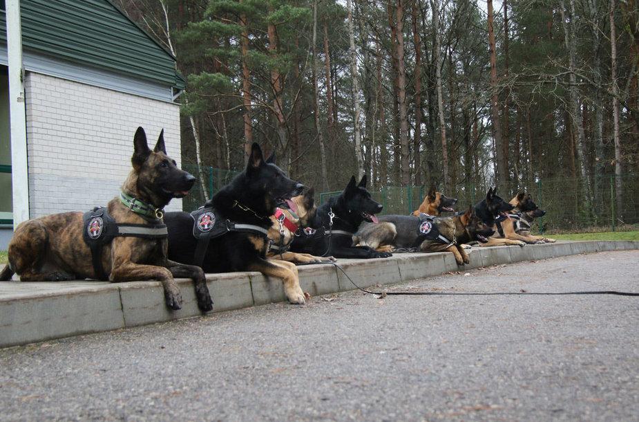 Tarnybiniai šunys